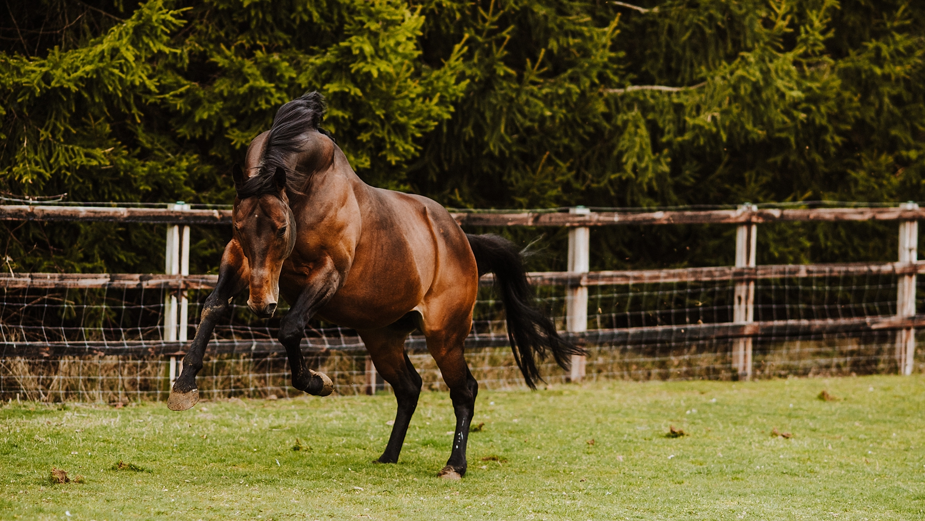 Horse photographer in surrey