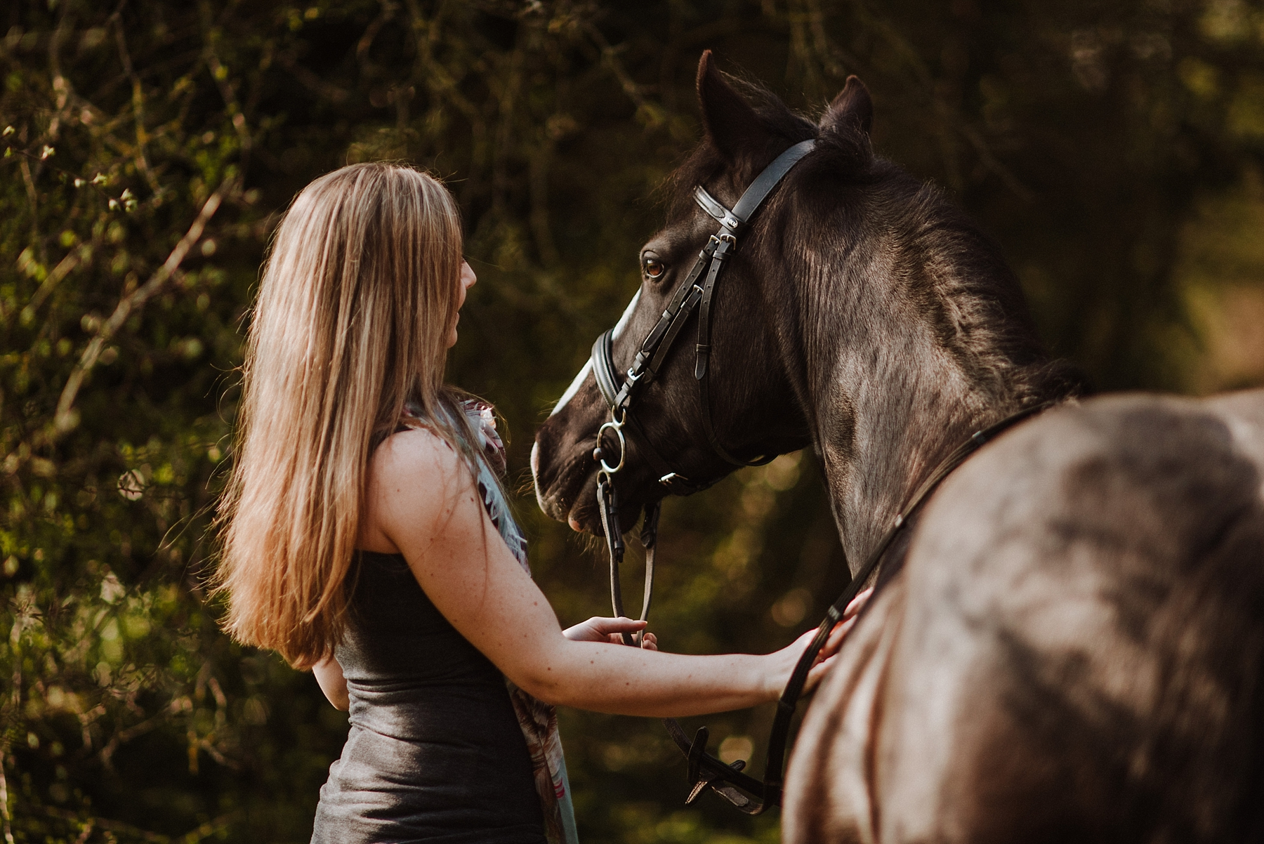 horse photography in surrey