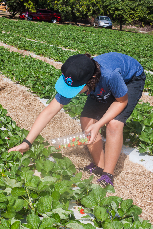 Strawberry Picking-9494.jpg