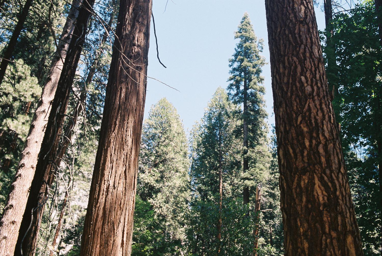 california_film-12.jpg