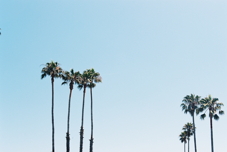 california_film-2.jpg