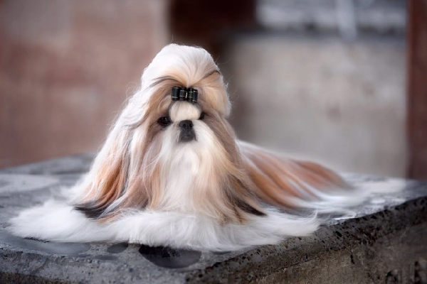 I wish my hair was like my dog's hair...