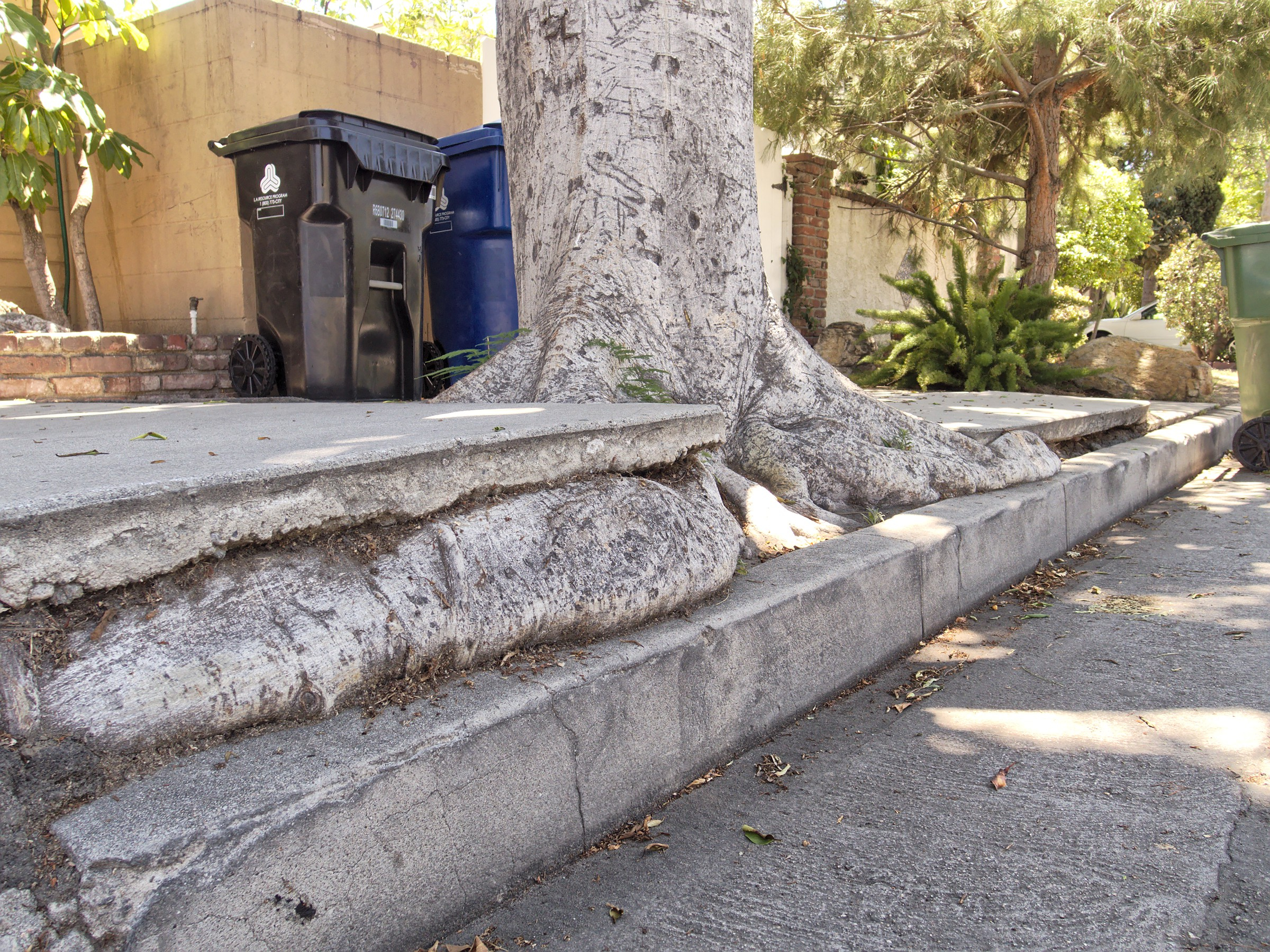 Pictured: If left unchecked, encroaching roots can damage sidewalks