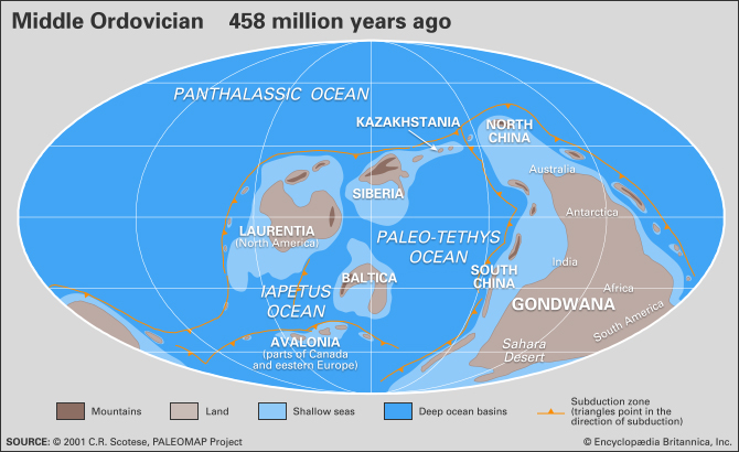 During the Ordovician, continent-sized shallow seas covered Australia, China, India, parts of Africa, North America and Siberia. Those seas nurtured an explosion of life.