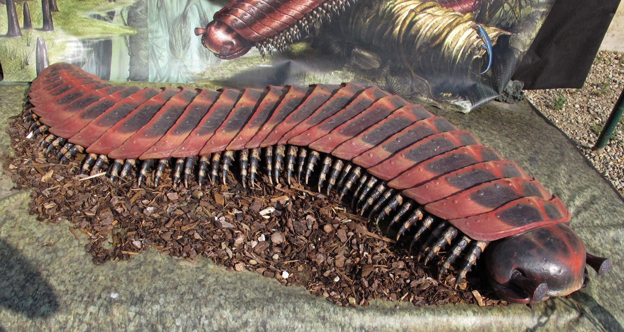 Giant myriapod