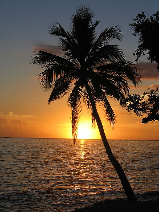 """They're almost as beautiful as they are deceptive  """"Sunset with coconut palm tree, Fiji"""" by Andrew Mandemaker - Own work. Licensed under CC BY-SA 2.5 via Wikimedia Commons"""