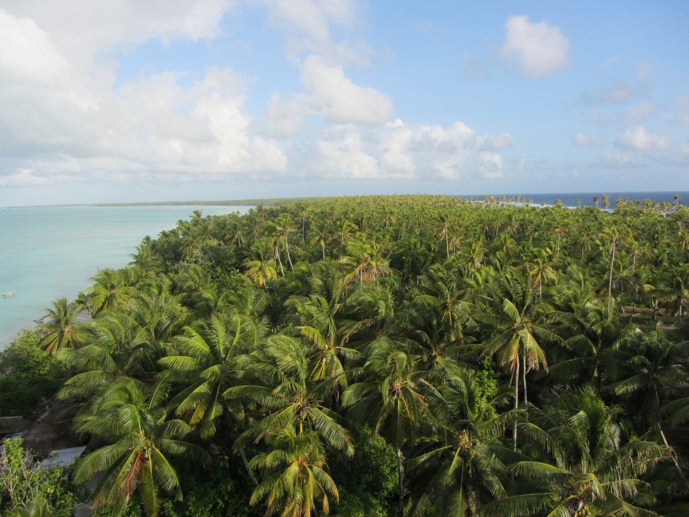 """A beautiful palm forest with no trees in sight.  """"Abaiang top view"""" by Flexman - Own work. Licensed under CC BY-SA 3.0 via Wikimedia Commons"""