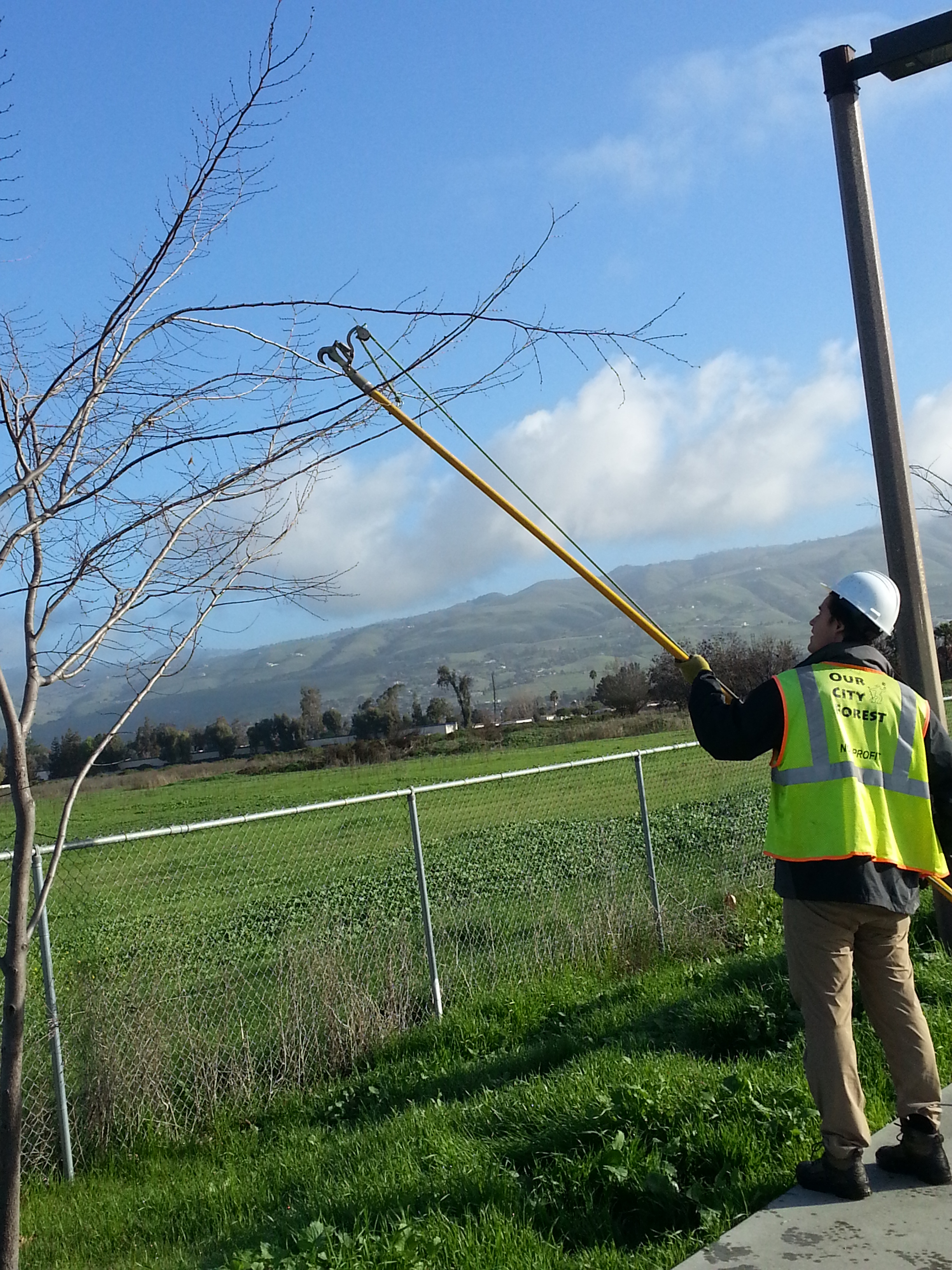 Sometimes you need extra reach to clip crossing or close branches in the canopy.