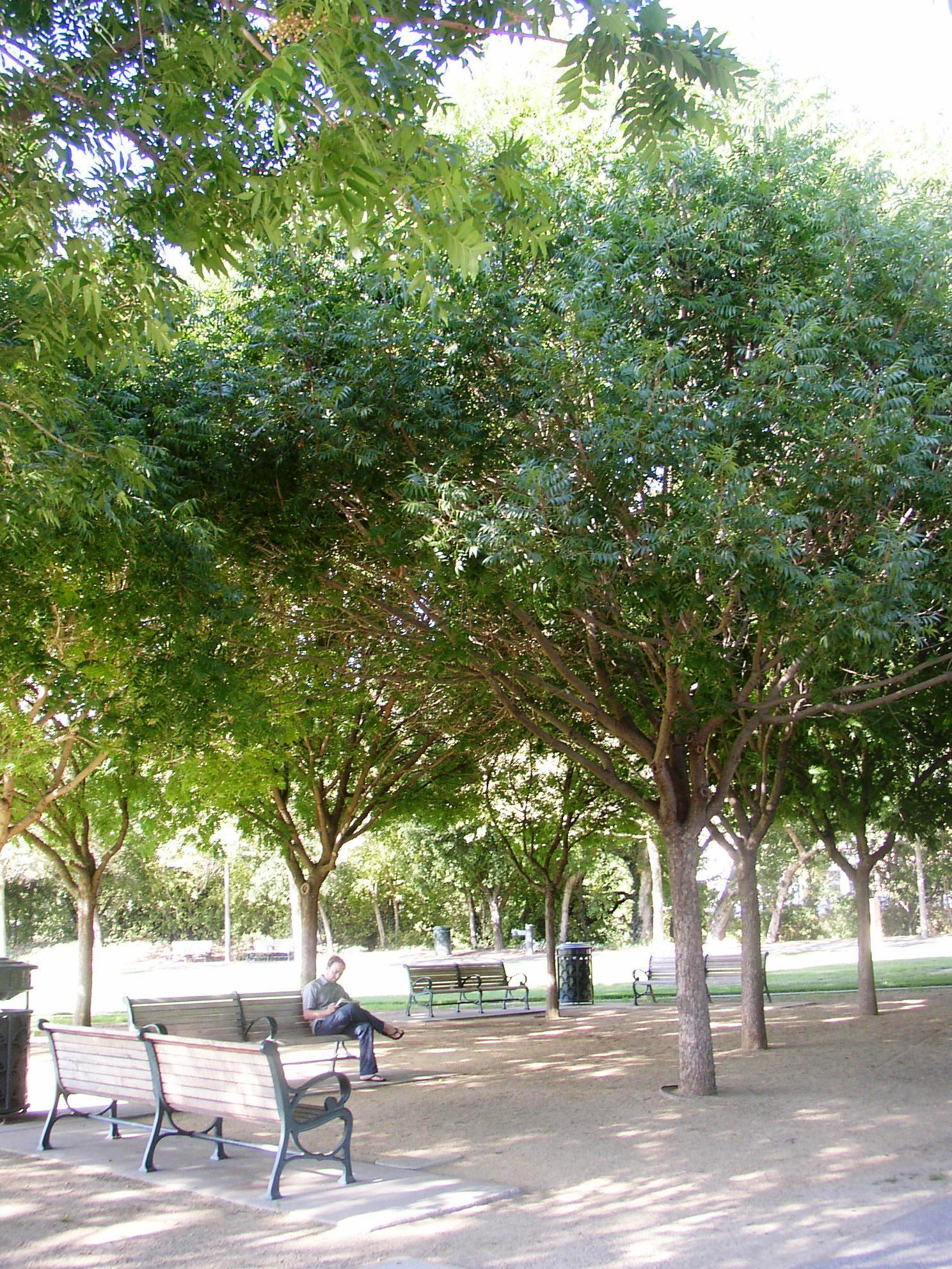 AIDS Memorial Grove - 2009