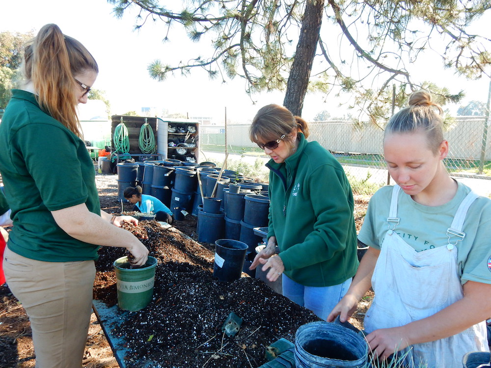 Sharon propagating grasses with former AmeriCorps Service Members in 2015.