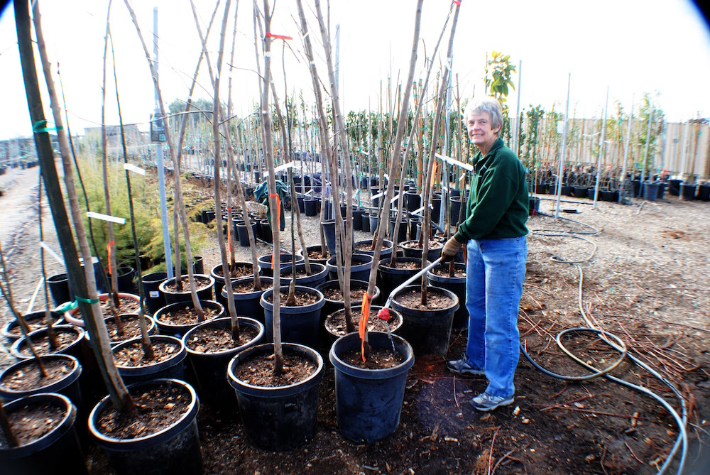 Judi Wilson watering trees recently potted at the Community Nursery during bare root season.