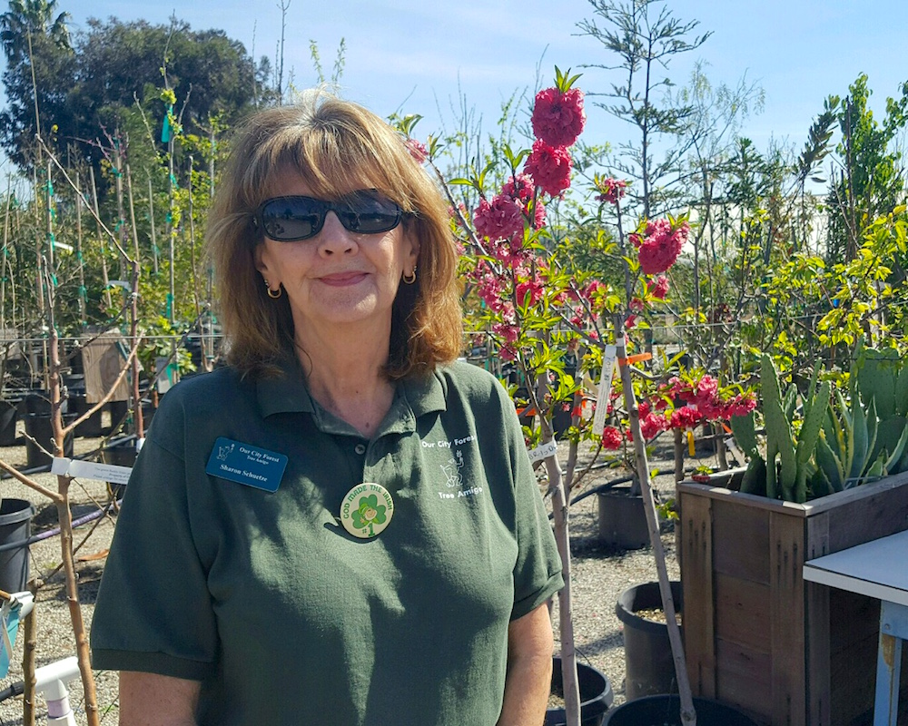 Tree Amigo Sharon Nursery Docent.jpg