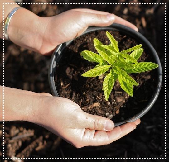 Hands on nursery plant.jpg