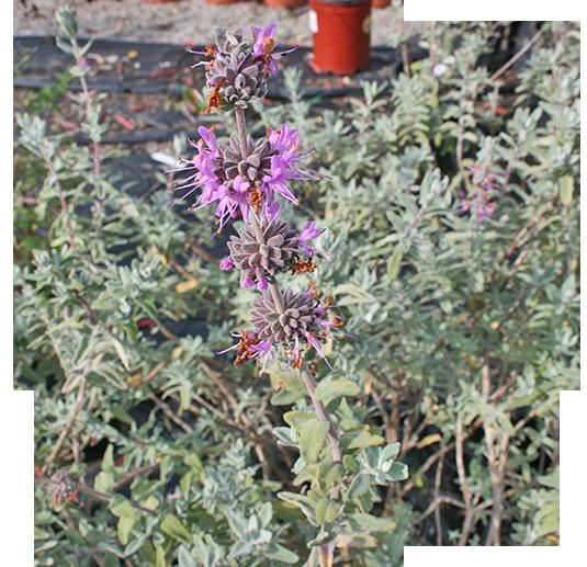 Nursery-shrub-icon1.png