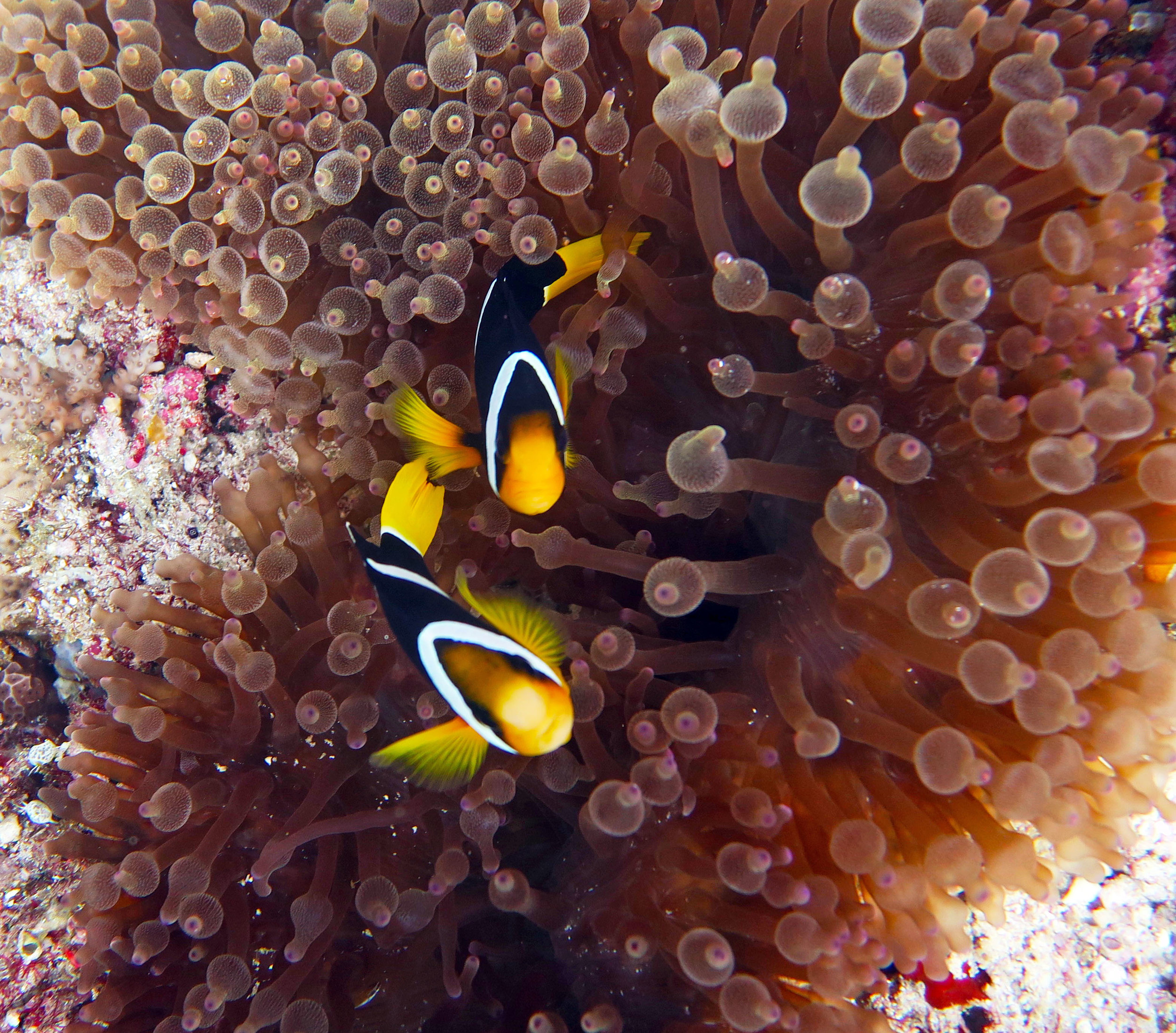 Scuba Diving in The Maldives, Underwater Photography