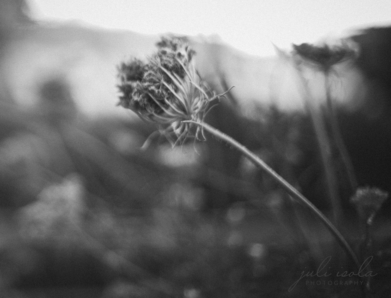 beach_nature_juliisolaphotography (3 of 20).jpg