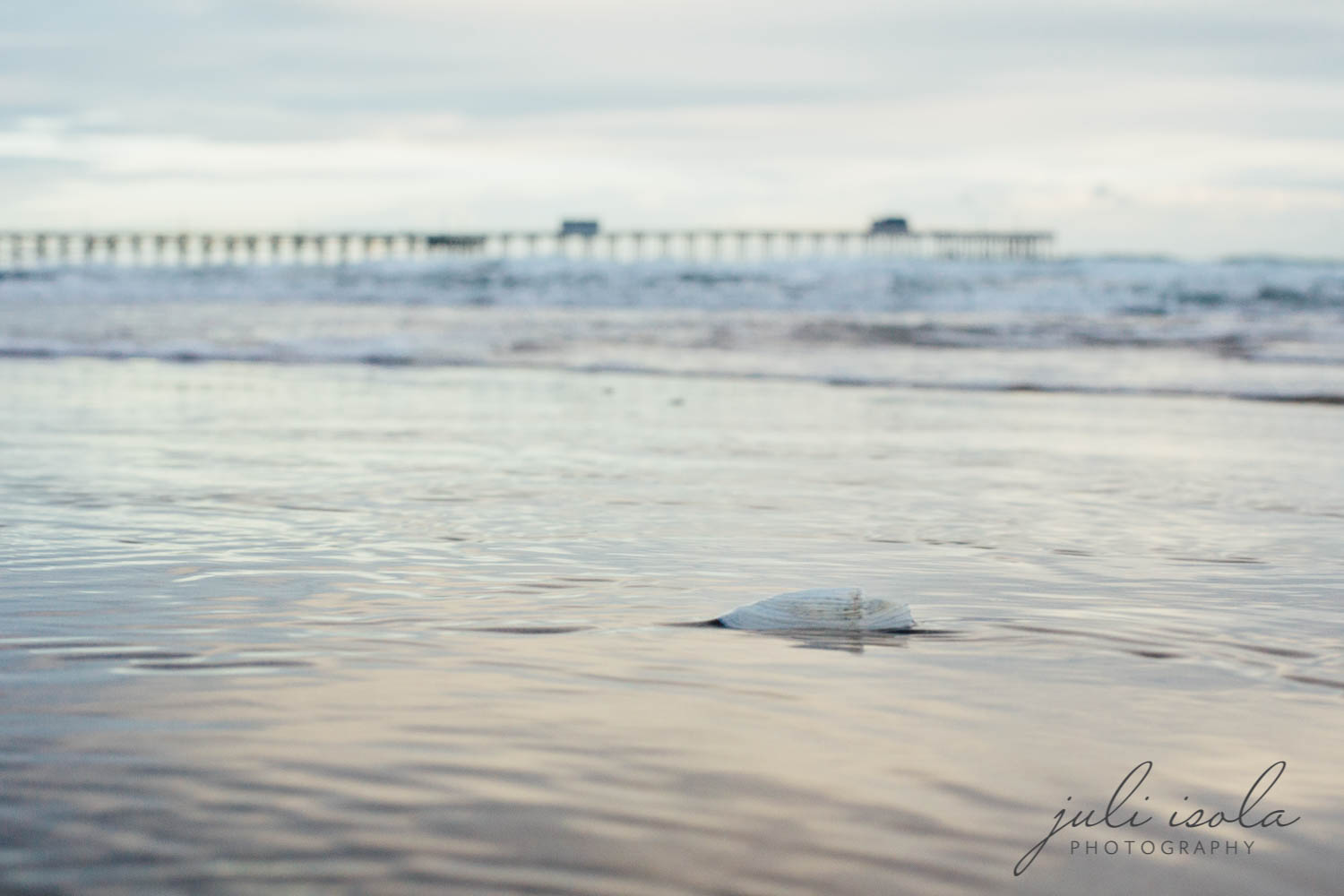 beach_nature_juliisolaphotography (19 of 20).jpg