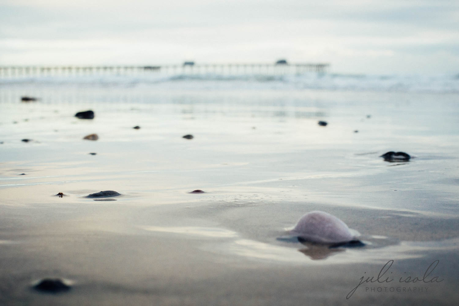 beach_nature_juliisolaphotography (20 of 20).jpg