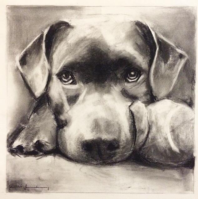 2015- LB Dog Portrait Drawing .jpg