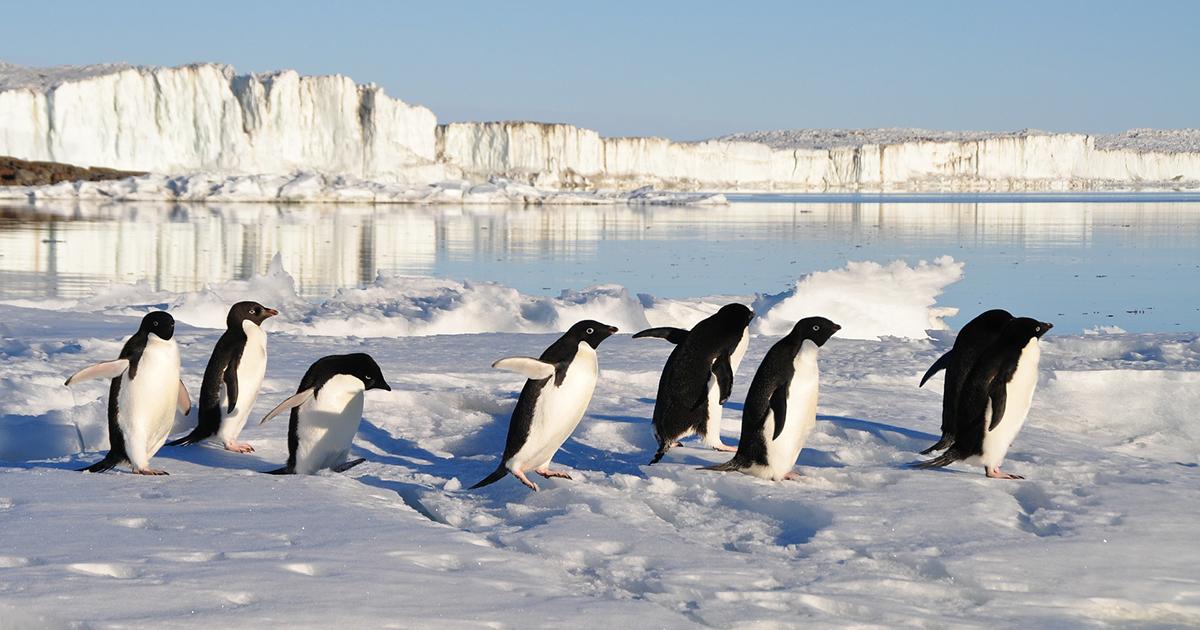 penguins-56097_1920_SM_WEB.jpg