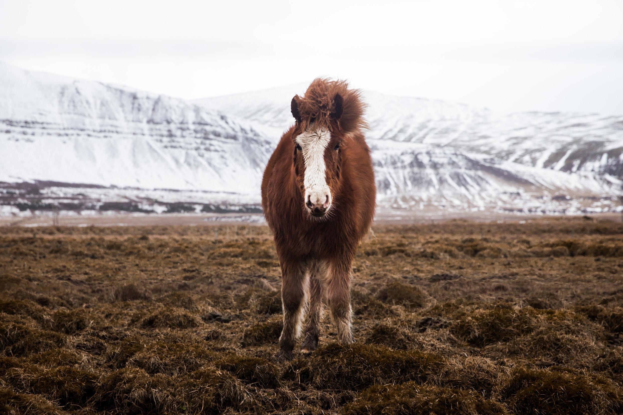 Horses (4 of 5).jpg