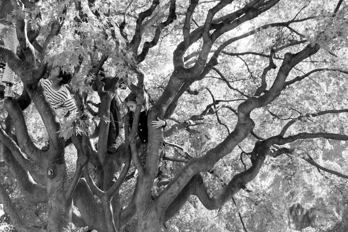 Kids in Tree, Turin