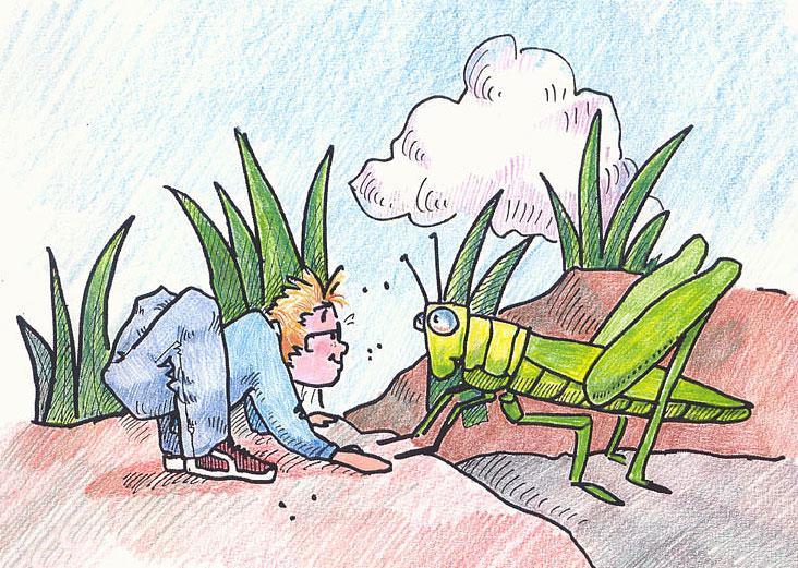 littleboy_grasshopper.jpg
