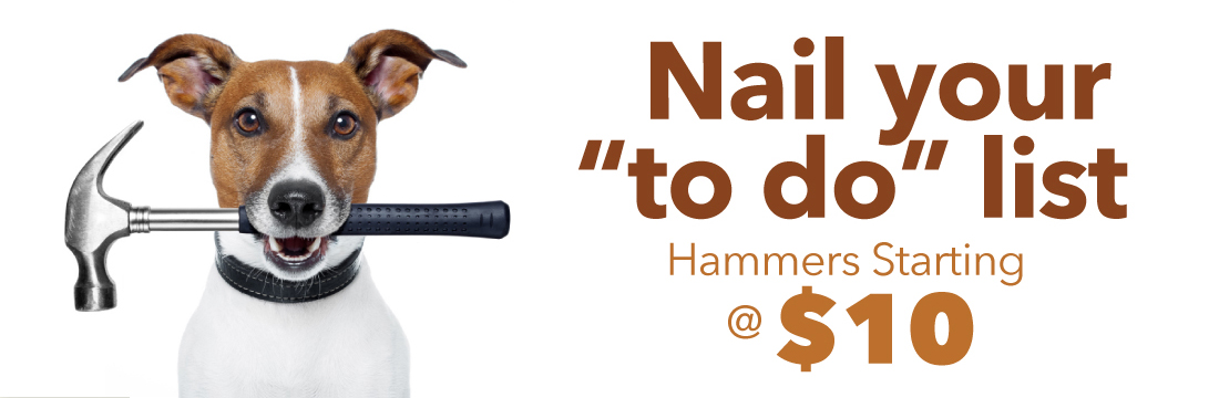hammer-dog-02.jpg