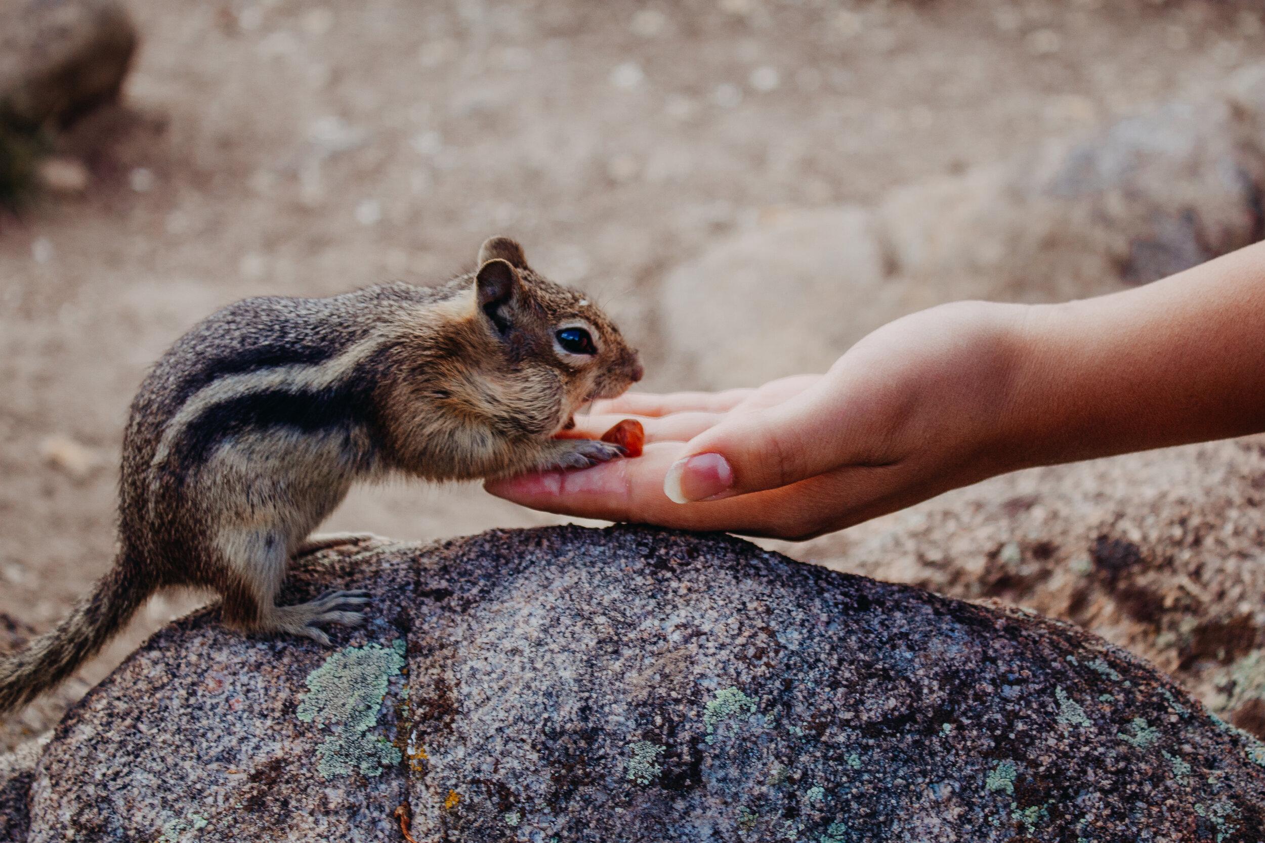 Cute chonky boy grabbing a peanut