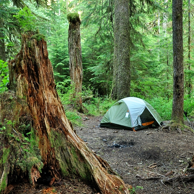Olympic National Park, July 2012