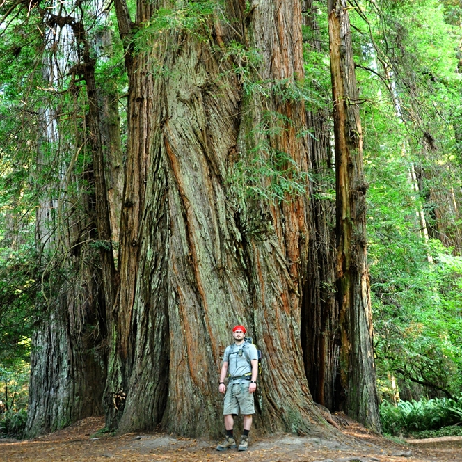 Redwood Forest, Oct 2012