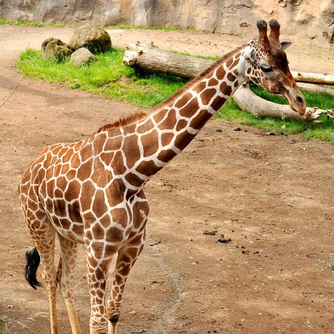 Oregon Zoo, June 2014