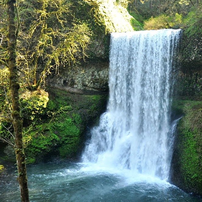 Silver Falls State Park, May 2014