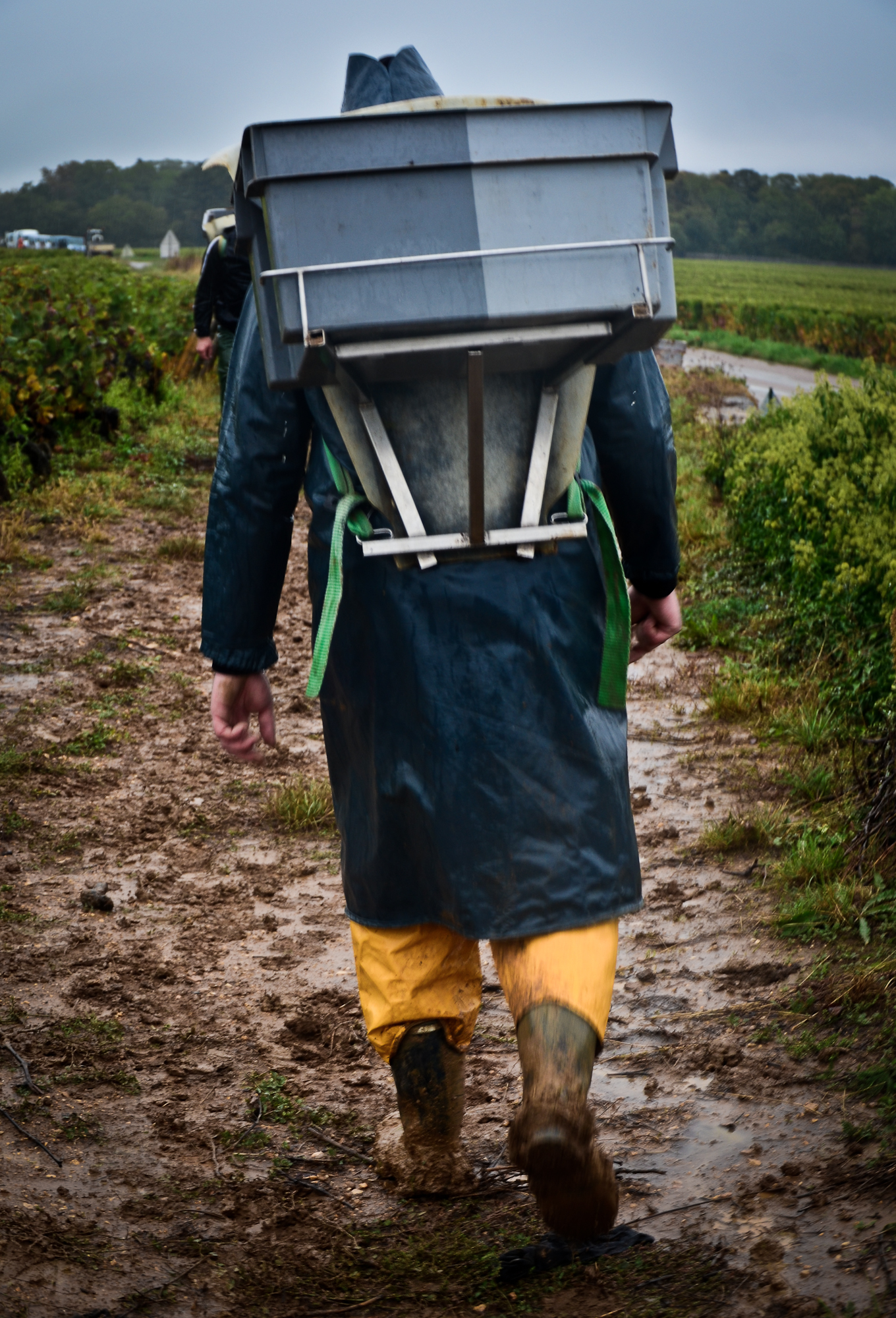 Hungry_Cyclist_Burgundy_Harvest12-13.jpg