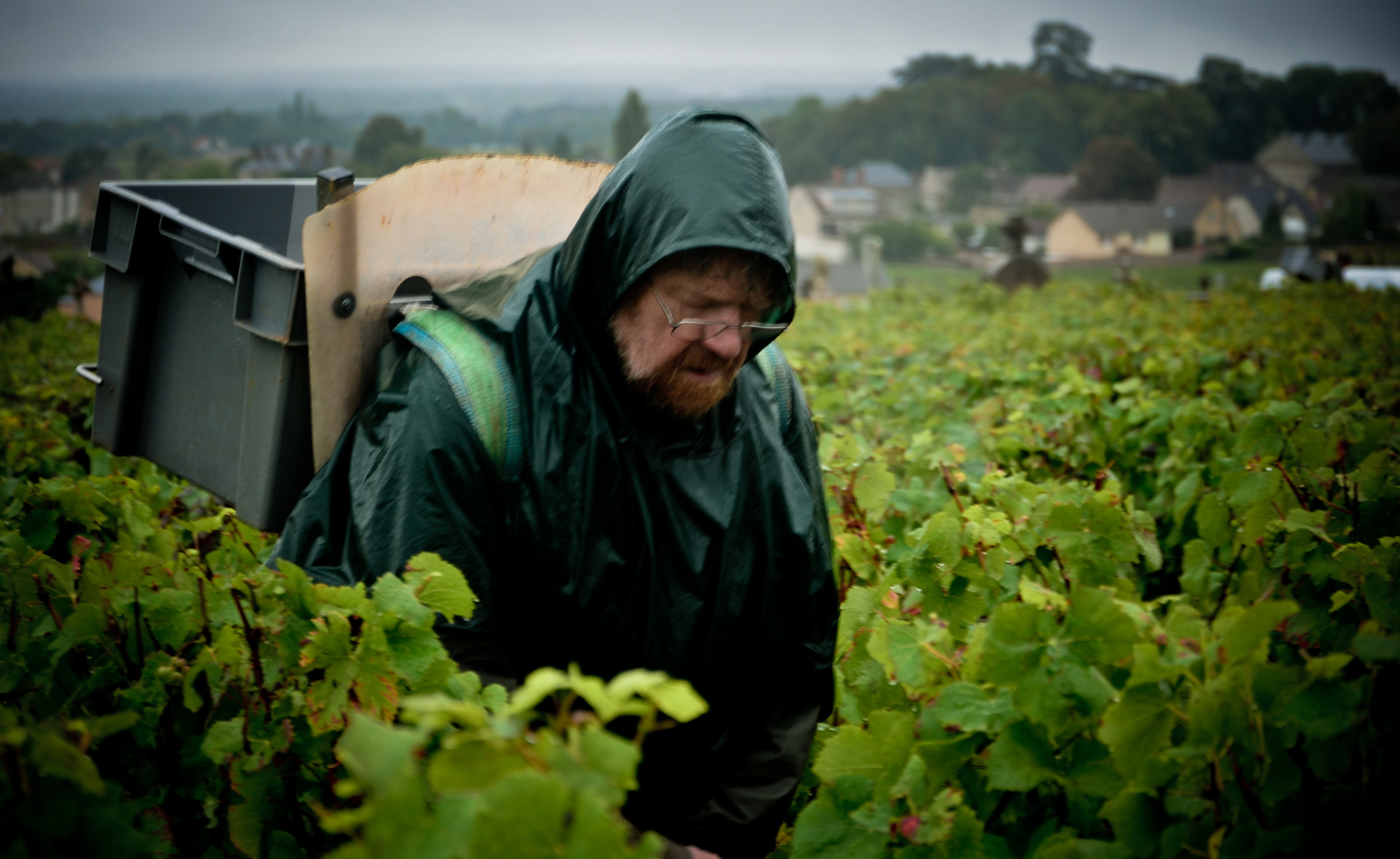 Hungry_Cyclist_Burgundy_Harvest12-16.jpg