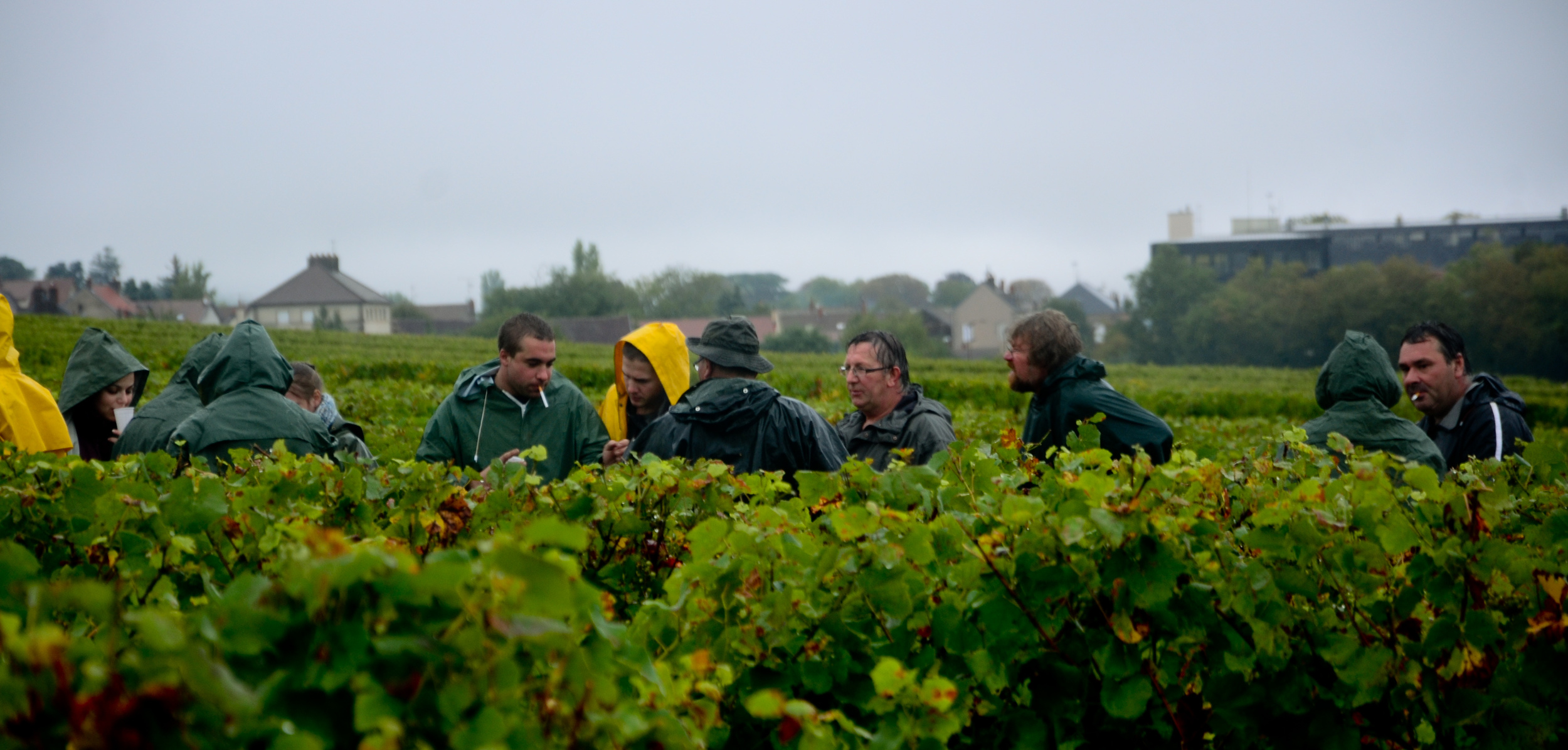 Hungry_Cyclist_Burgundy_Harvest12-45.jpg