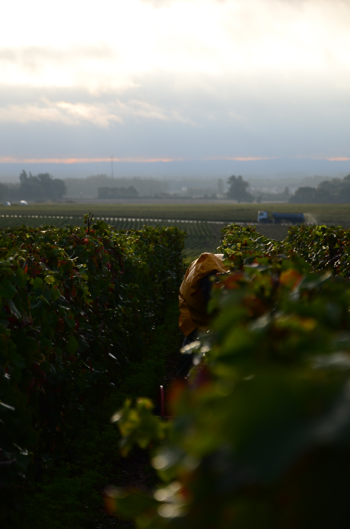 Hungry_Cyclist_Burgundy_Harvest12-70.jpg