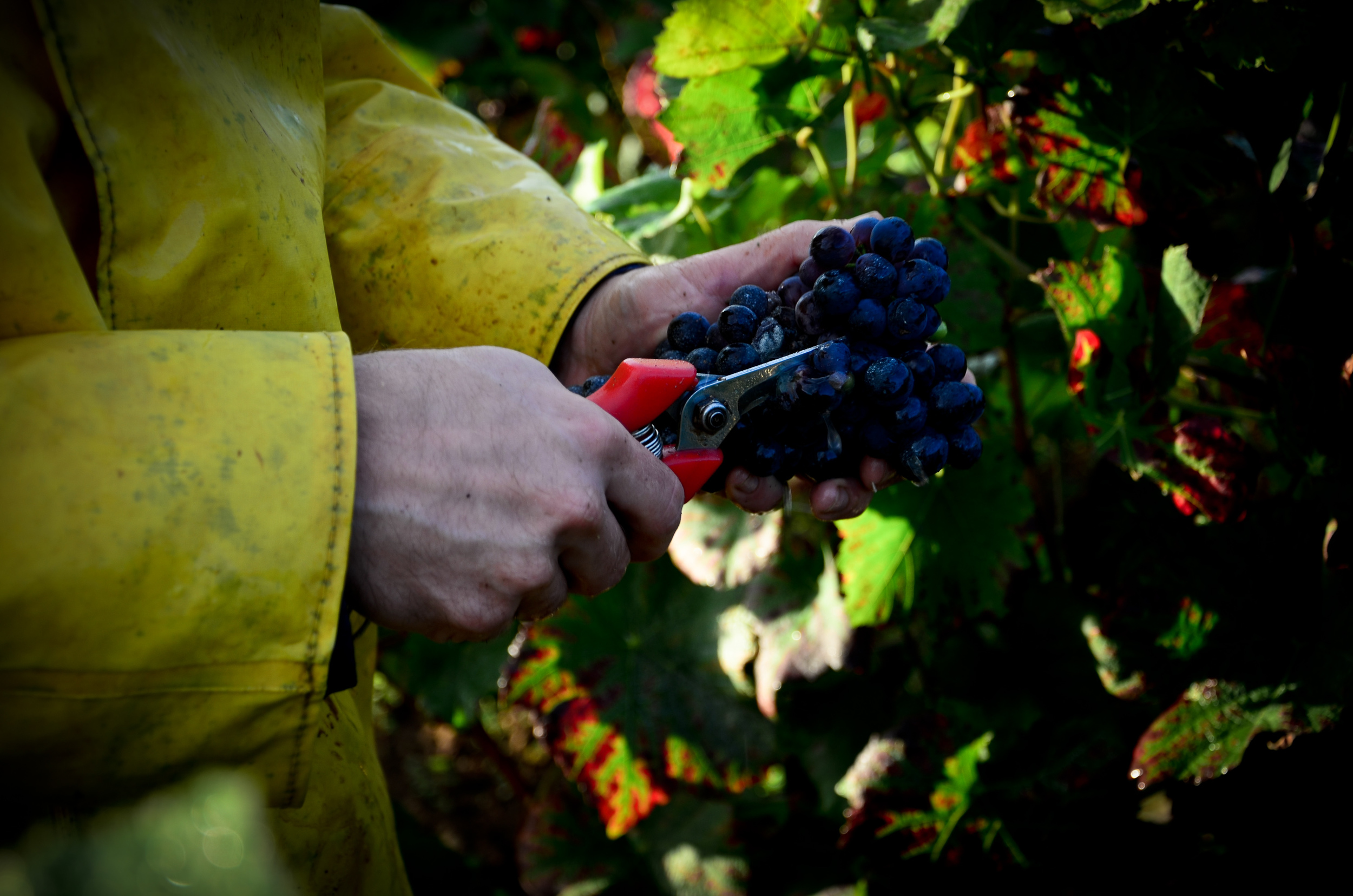 Hungry_Cyclist_Burgundy_Harvest12-77.jpg