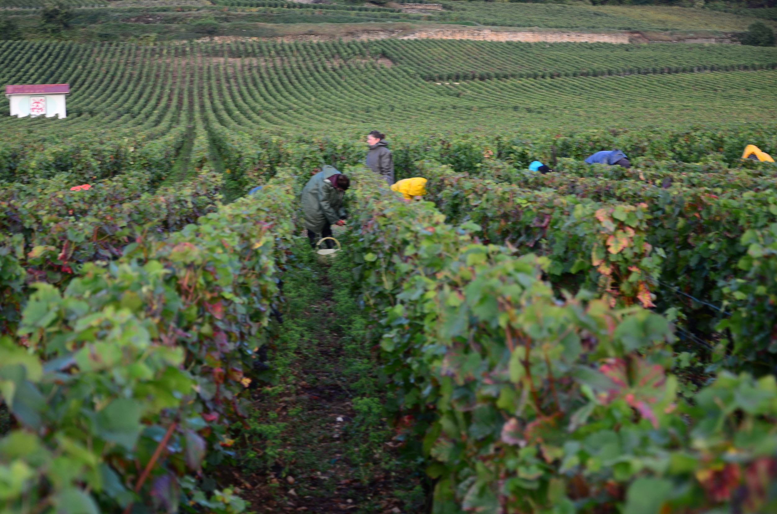 Hungry_Cyclist_Burgundy_Harvest12-80.jpg