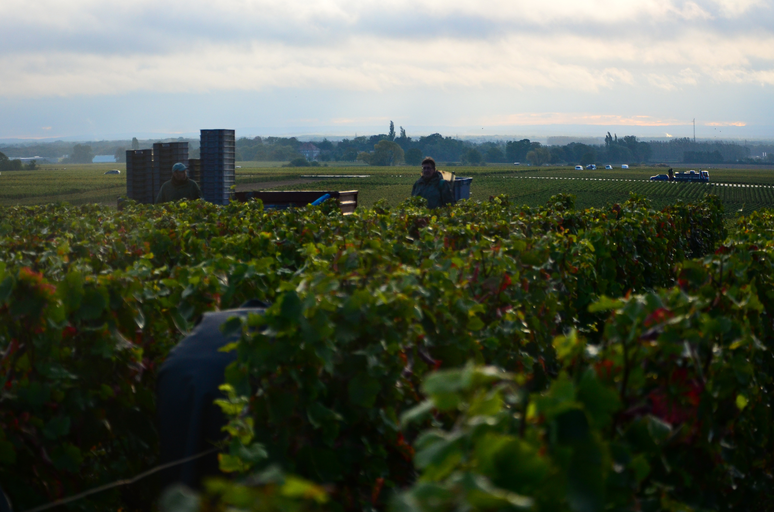 Hungry_Cyclist_Burgundy_Harvest12-84.jpg