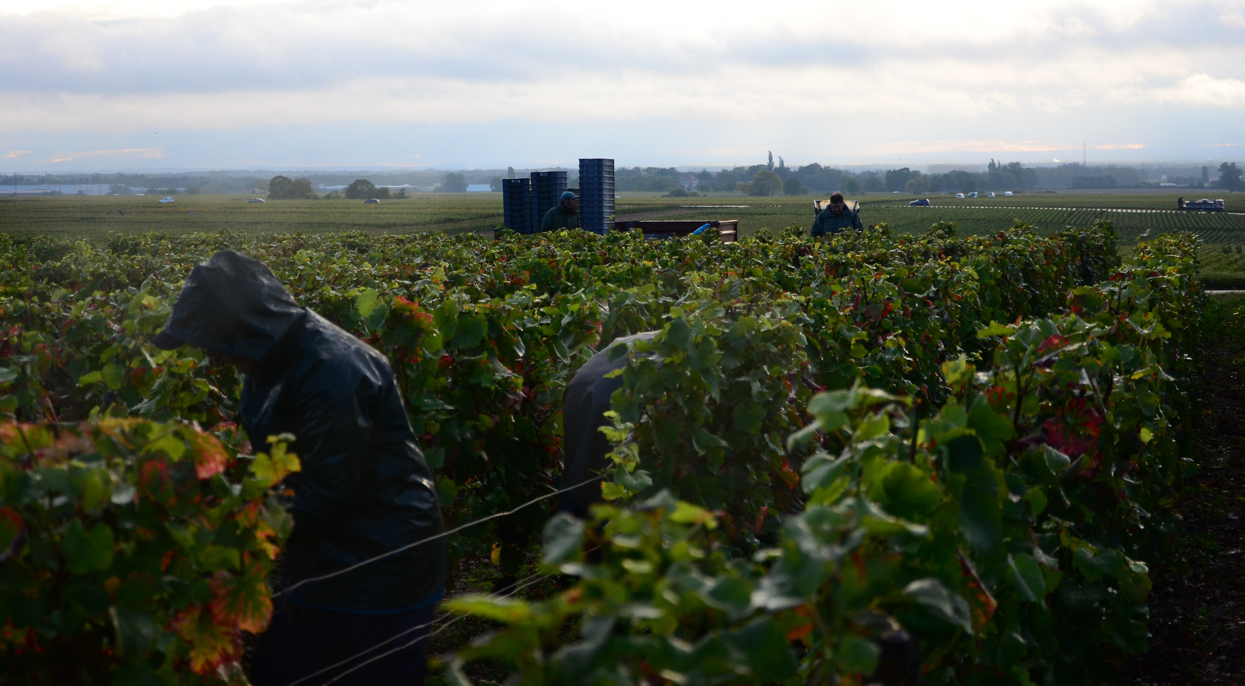 Hungry_Cyclist_Burgundy_Harvest12-85.jpg