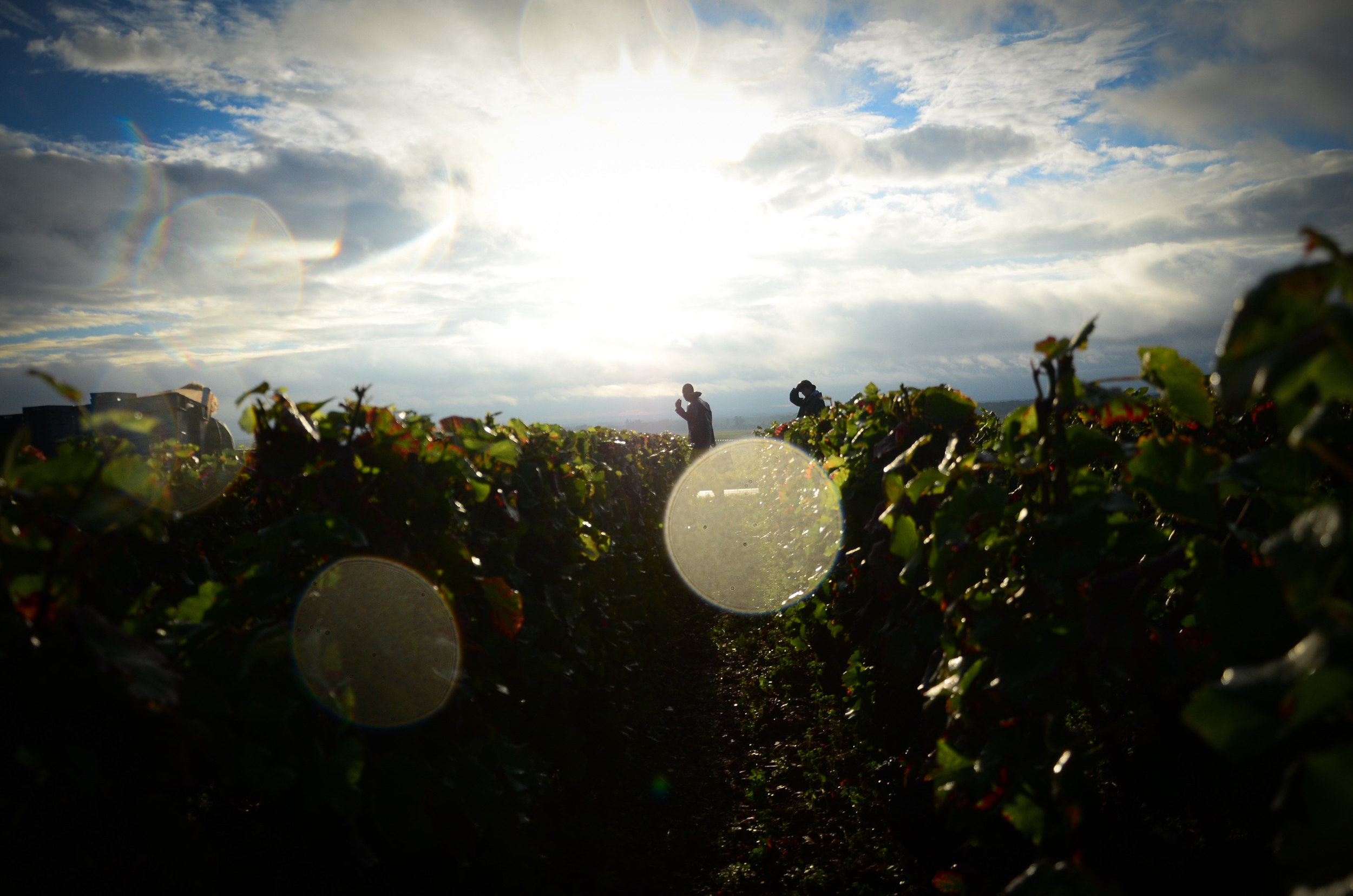 Hungry_Cyclist_Burgundy_Harvest12-88.jpg