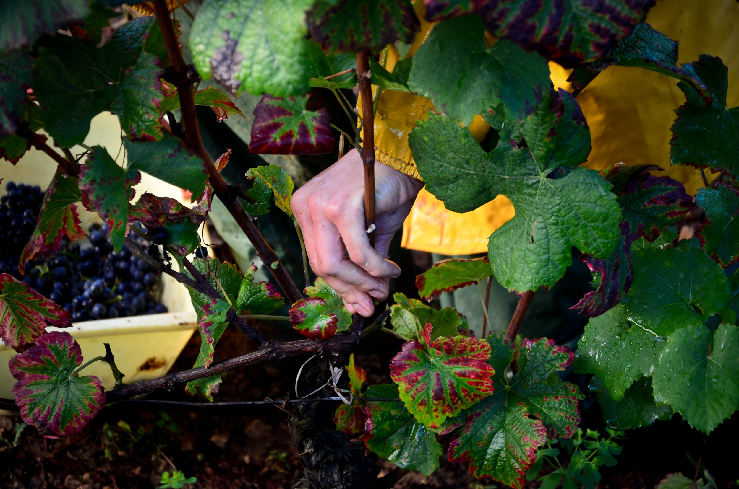 Hungry_Cyclist_Burgundy_Harvest12-90.jpg