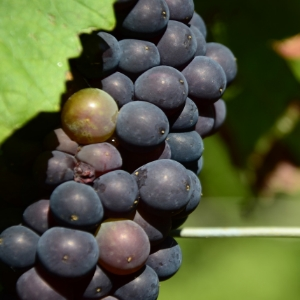 Learn about the unique terroir of the region