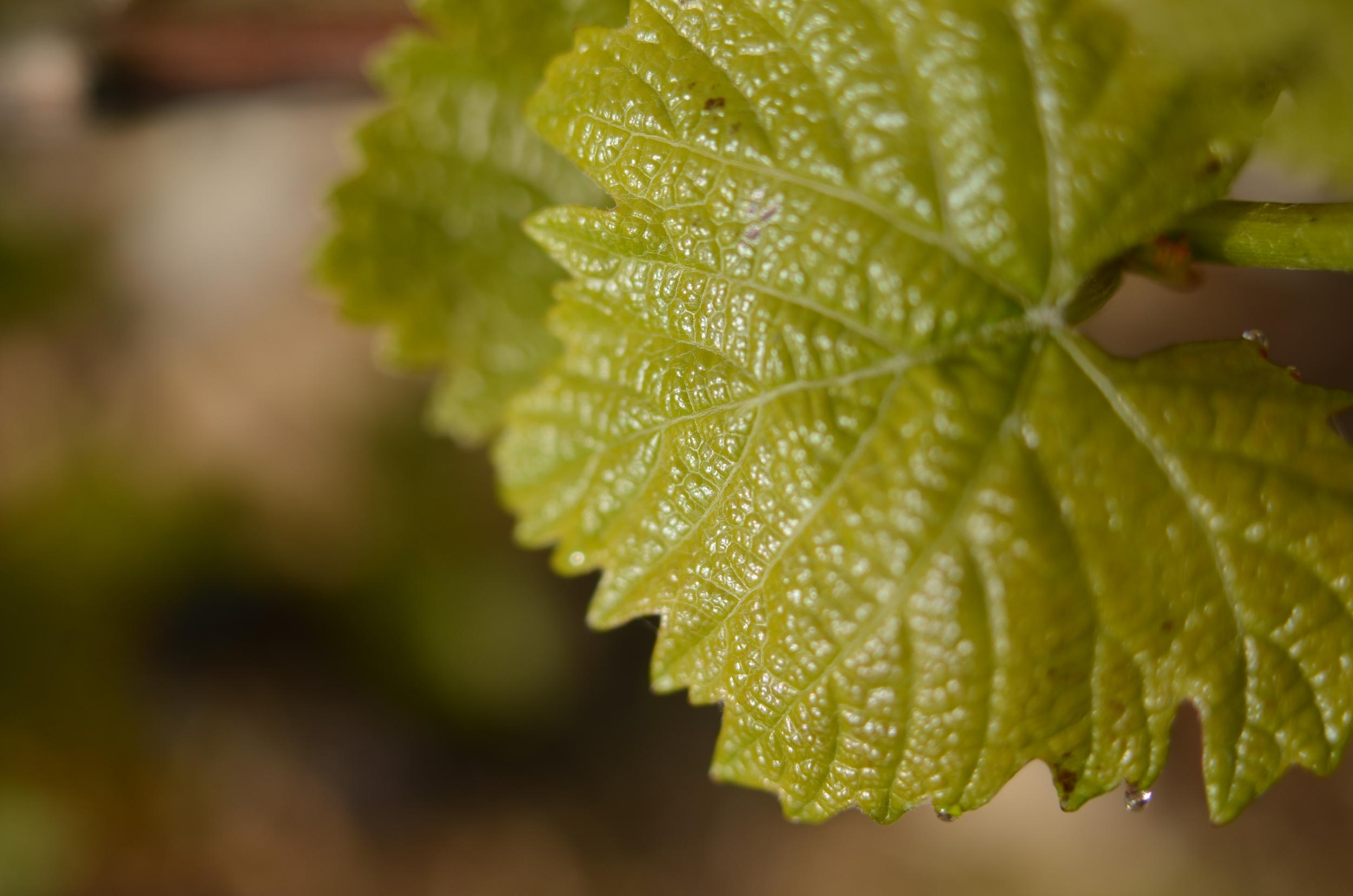 Burgundy11-3.jpg