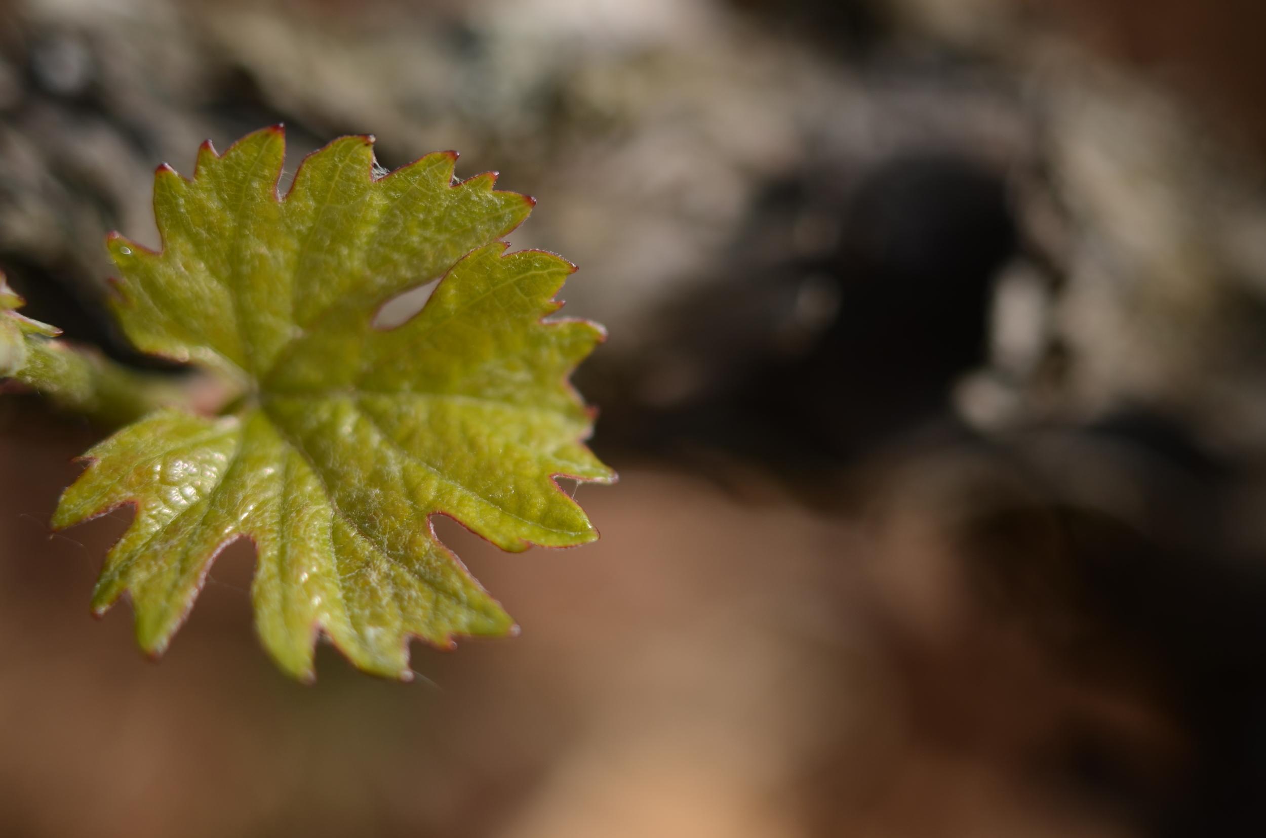 Burgundy11-6.jpg