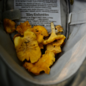 hunt,cook and enjoy mushrooms and truffles