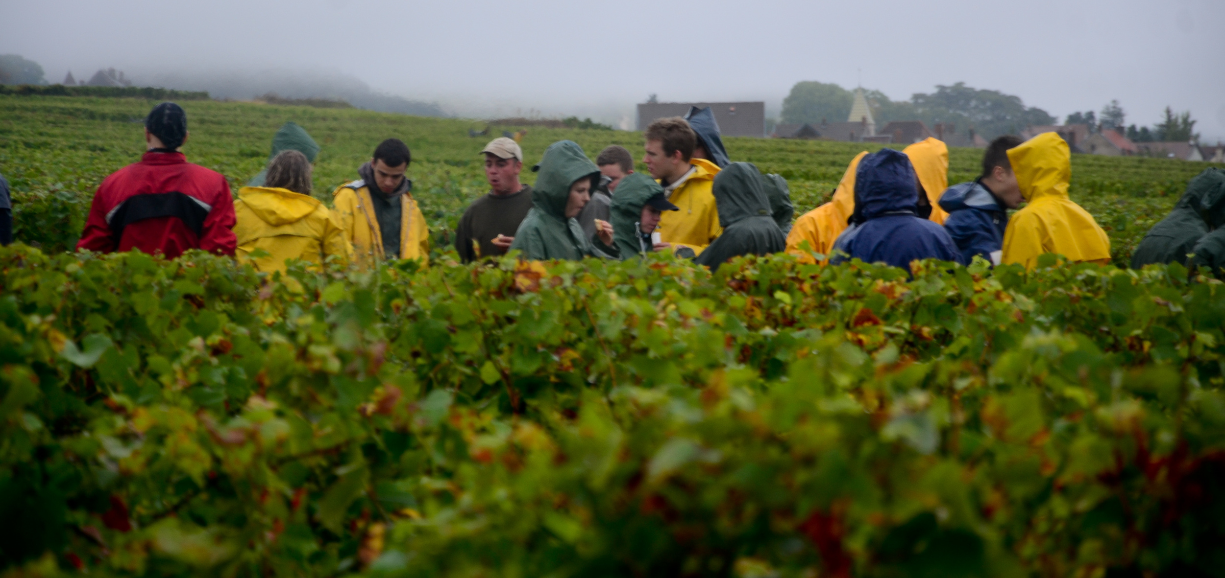 Hungry_Cyclist_Burgundy_Harvest12-46.jpg
