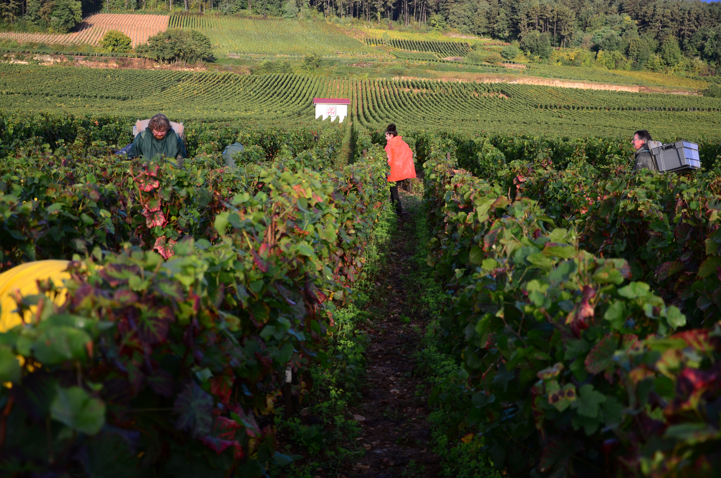 Hungry_Cyclist_Burgundy_Harvest12-75.jpg