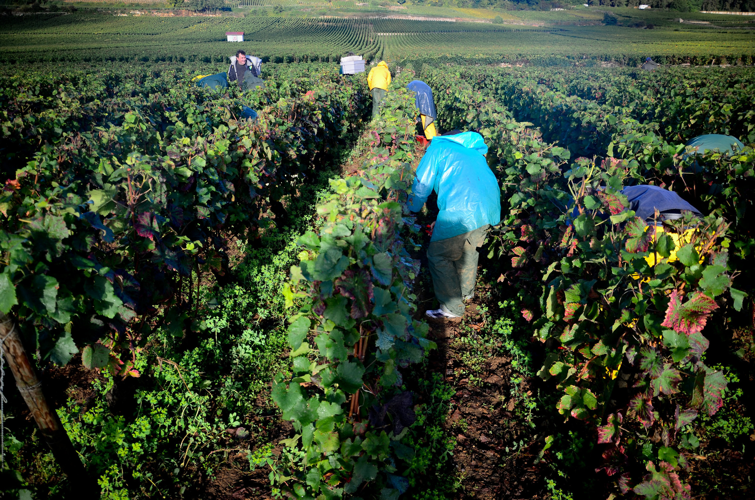 Hungry_Cyclist_Burgundy_Harvest12-98.jpg
